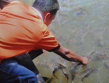 Taman Pelancongan Konservasi Kelah Sungai Pelong