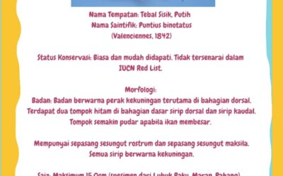 Public Information – Ikan Tebal Sisik (Spotted Barb)
